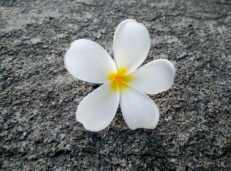 folwer: Folwer in thailand
