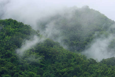 Beautiful foggy green forest after raining in Thailand photo