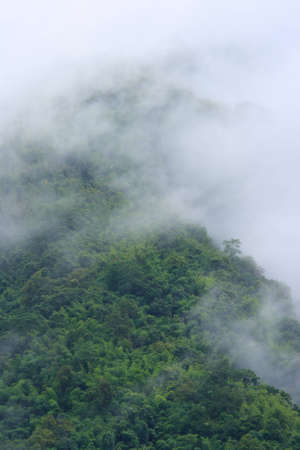 Nice foggy green forest after raining in Thailand photo