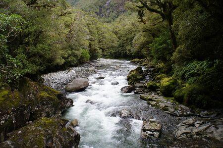 baratro: The Chasm - lussureggiante foresta pluviale e il paesaggio fluviale - Nuova Zelanda