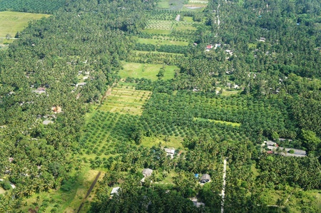 Aerial photo of coconut and palm farms in Thailand Stock Photo - 14461763