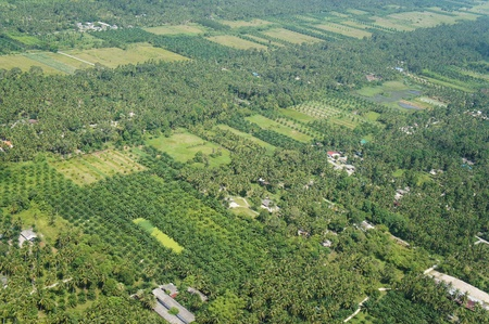 Aerial photo of coconut and palm farms in Thailand photo