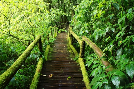 bridge in nature: Forest Trail at Beautiful Rain Forest - Doi intanon, Chiang Mai Province, Thailand