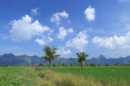 Green rice field and coconut trees beside a small house in Thailand photo