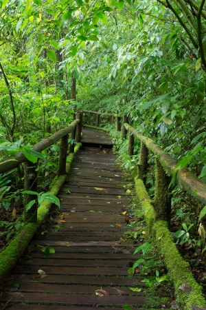 Classic wooden walkway in rain forest - Doi intanon, Chiang Mai Province, Thailand photo