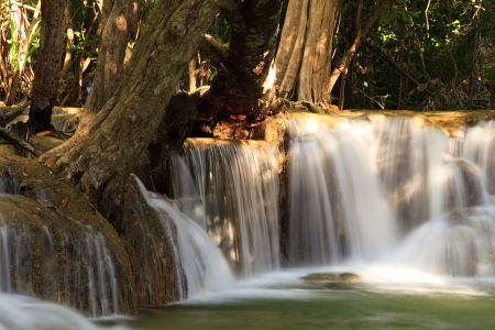 Tree and Flowing Waterfall photo