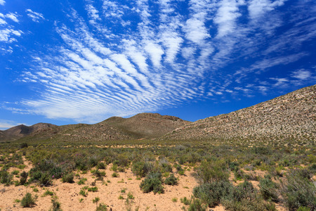 south africa soil: Savanna forest landscape and blue sky in Cape Town, South Africa