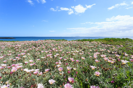 south african birds: Deep blue sea and beautiful flowers in Cape Town South Africa