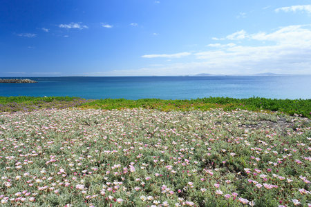Deep blue sea and beautiful flowers in Cape Town South Africa photo