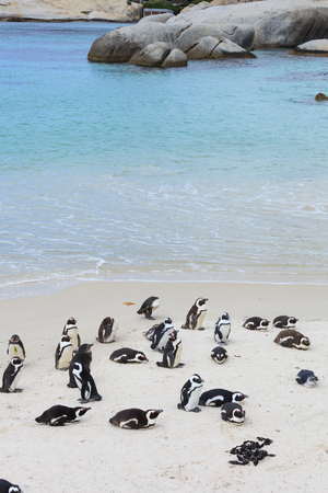 penguin colony: Boulders Beach, Penguin Colonies, Cape Town,South Africa