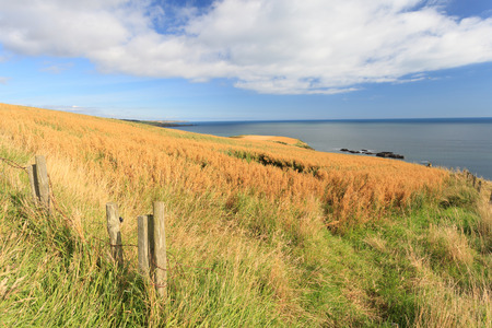 grain fields: Wheat field and blue sky with clouds at shore line close to North sea, Aberdeen, Scotland, UK Stock Photo