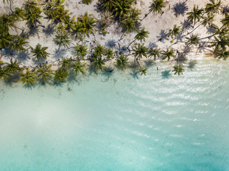 Coconut palm trees with blue sky. Travel tourism at Bora Bora island, Tahiti, French Polynesia, South Pacific Ocean Stock Photo