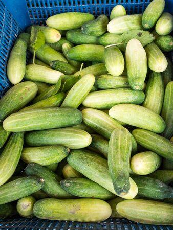 local: Cucumber at Local Market