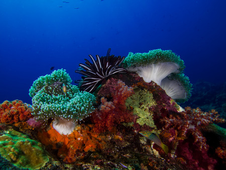 Underwater Scape of Coral Reef and Anemone