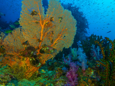 seafan: Underwater Seascapte of seafan coral and fish around coral reef Stock Photo