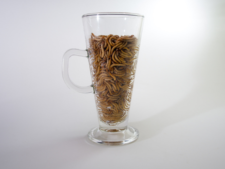 mealworm: Mealworm in the beer glass. Thinking of posion as junk food, drinking alcohol