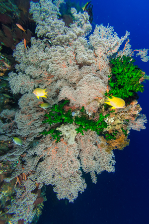 reef fish: Underwater of Coral Reef and fish Stock Photo
