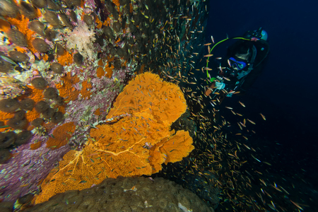 scuba diver: Scuba diver and  colorful coral reef