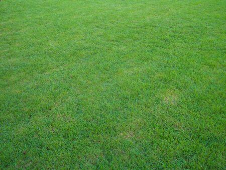 natue: The beautiful green grass field in the garden