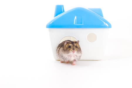 Hamster and his home on white background