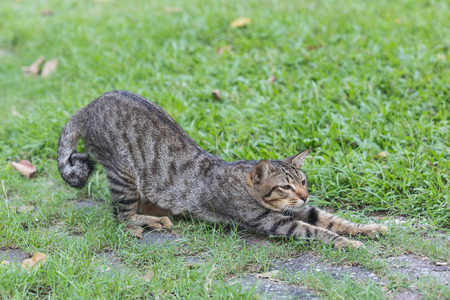 The relaxing domestic cat in the grass field
