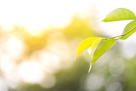 Spring Foliage, Green Leaves Background Archivio Fotografico