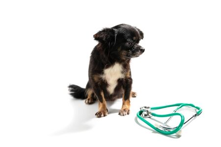 The cute puppy, cute dog on white background