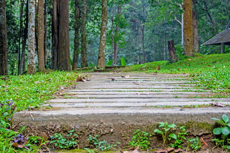 Walkway through the woods photo