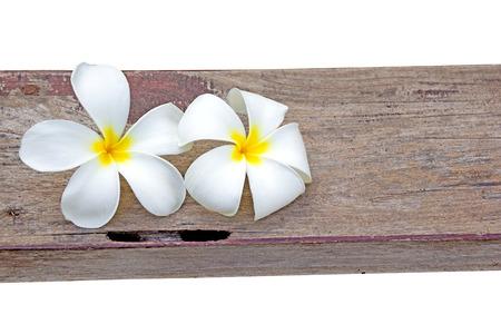 Tropical flowers frangipani on wood photo