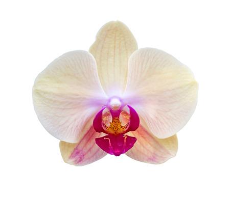 Orquídea blanca sobre fondo blanco Foto de archivo - 35132571