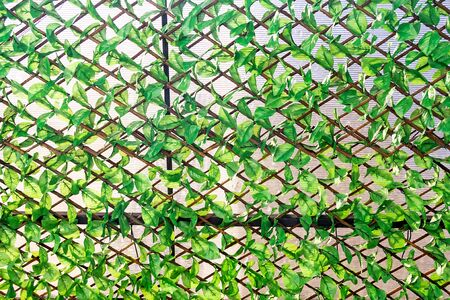 overgrown: wooden fence overgrown with green leaf. Stock Photo
