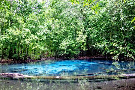 krabi: Emerald Pool. Krabi, Thailand