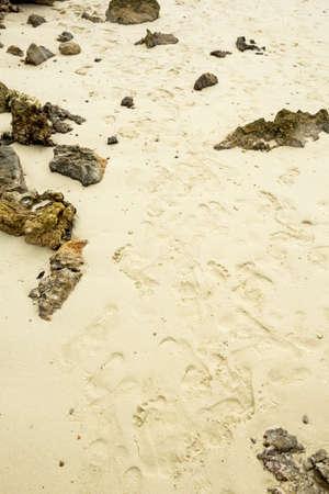 footsteps: Footsteps in the crisp sand Stock Photo