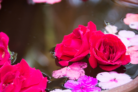 floating on water: Soft Red rose petal floating water in bowl basin Stock Photo