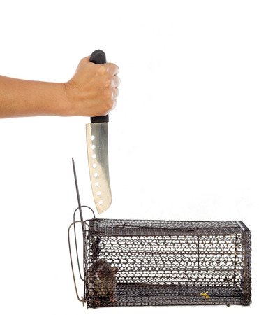 rid: Rat in the Cage was killed in isolated White Background