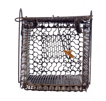 mousetrap: Mousetrap (rat cage) isolated white background Stock Photo