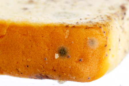 Moldy bread isolated on white background Stock Photo