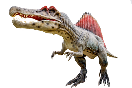 Dinosaur spinosaurus and monster model Isolated white background
