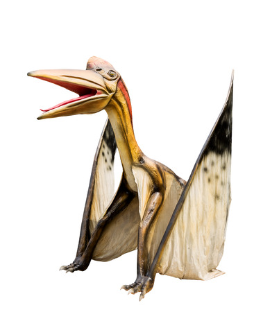 Dinosaur Pteranodon Isolated white background ,with clipping path