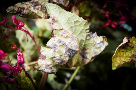 diseases on leaves