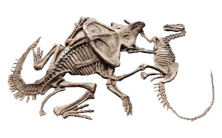 白い背景に分離モデル恐竜 写真素材