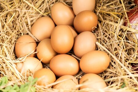 Chicken eggs lying in the hay