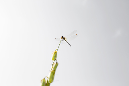 dragonfly isolated on agray background