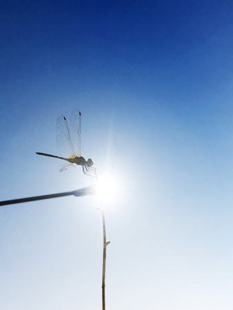 Dragonfly on a stick with a dusk sky behind, soft focus 스톡 콘텐츠