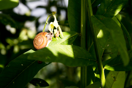 Snail on green leaf Stock Photo