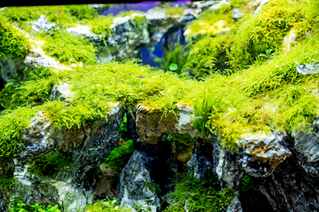 Beautiful Tropical Freshwater Aquarium with Green Plants and Fishes Stock Photo