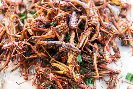 Fried Insect street food of Thailand Foto de archivo - 121176227