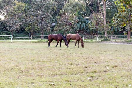 Horse in the garden 版權商用圖片