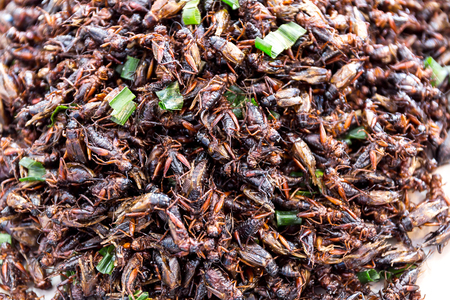 Fried Insect street food of Thailand