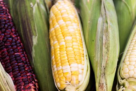 Fresh sweet Corn Seed Packets , Close up Corn seeds 版權商用圖片